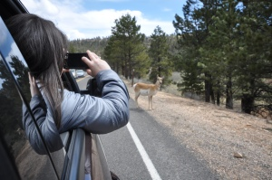 Traffic Jam at Bryce Canyon State Park